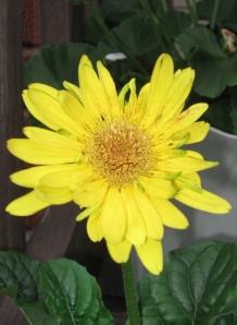 flowers 2014 2
